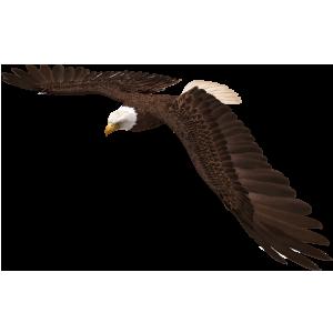 Eagle-class
